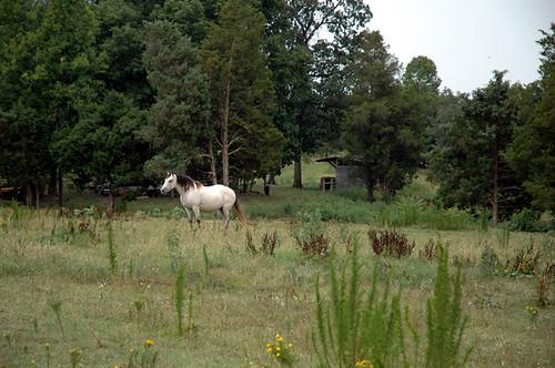 horse at NC vineyard and winery