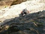 Emil beim Felsklettern