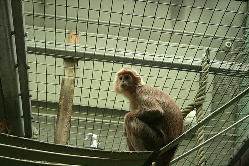 Trauriger Primat / Sad primate