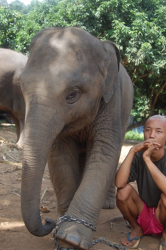 Baan Chang elephant and mahout