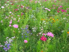 nous sommes un champ de fleurs...