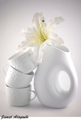 White Passion ! (Jamal Alayoubi) Tags: life light shadow white flower cup rose 50mm still nikon tea drink 14 lilly kuwait d200 nikkor jamal q8 outstandingshots aplusphoto alayoubi