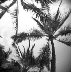 Black Palms