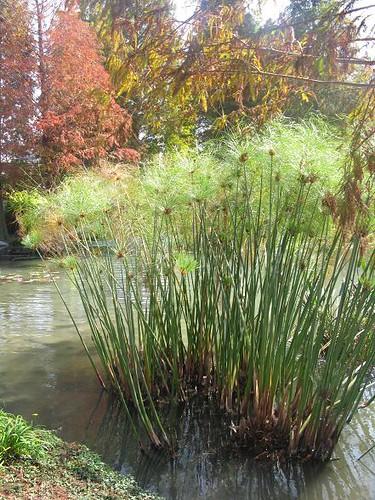 water grass.JPG