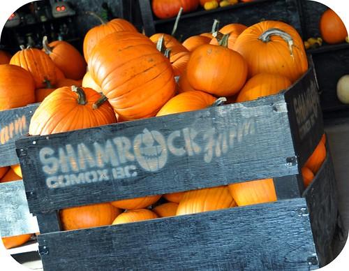 Shamrock Farm