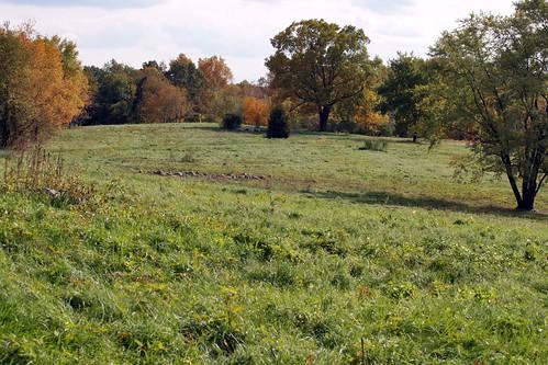 bird field