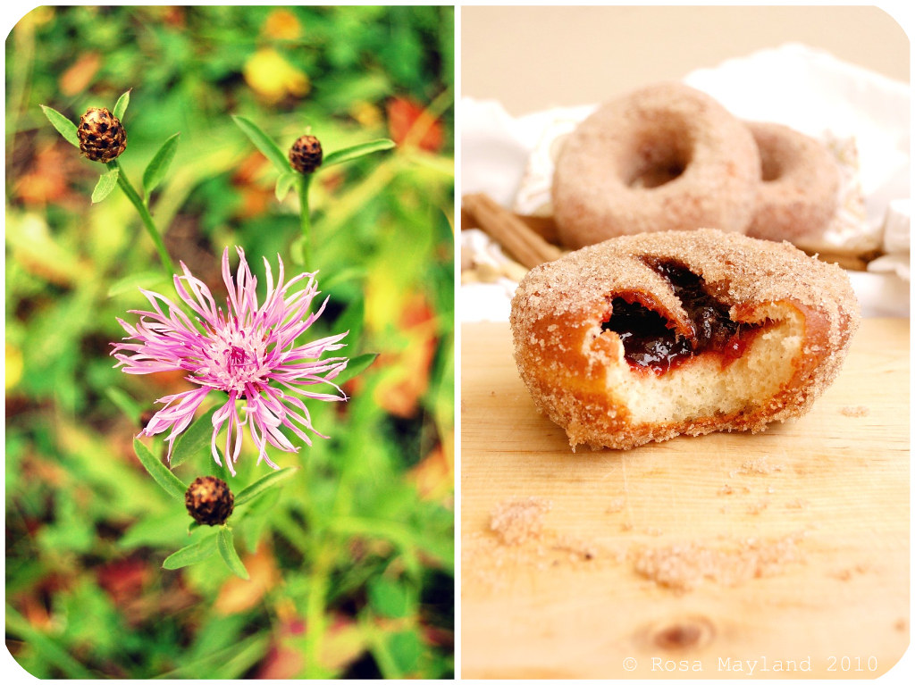 Doughnuts Picnik collage 1 bis