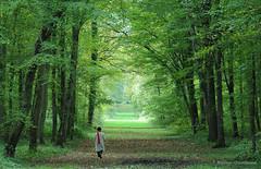 L'charpe rouge (Hlne Quintaine) Tags: france automne rouge vert paysage arbre iledefrance parc blanc chemin bois octobre feuille tronc manteau personnage charpe sousbois essonne feuillage parcdechamarande