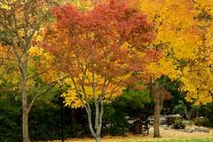 Fall in Ashland (Camra_ Art / Ellen Gardner) Tags: autumn trees red orange fall nature colors leaves oregon ashland 123nature