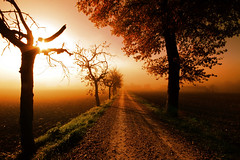 MMP - Misty Mistery Path (David Butali) Tags: road sun tree misty fog canon alba path side country sigma campagna nebbia 1020 marche urbania campi 500d coltivati saariysqualitypictures dylan66