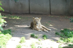 London Zoo #34