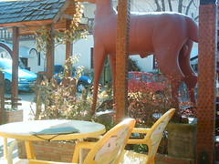 Genitales de ciervo rojo (*Tosh*) Tags: argentina rojo general cerveza deer villa cordoba belgrano ciervo gral genitales