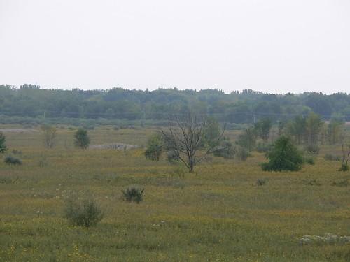 Goose Lake Prairie State Natural Area 2006