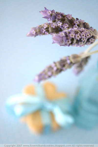 Lavender in focus