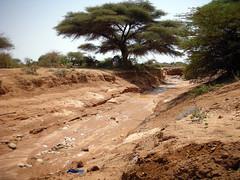(sub culture) Tags: somaliland