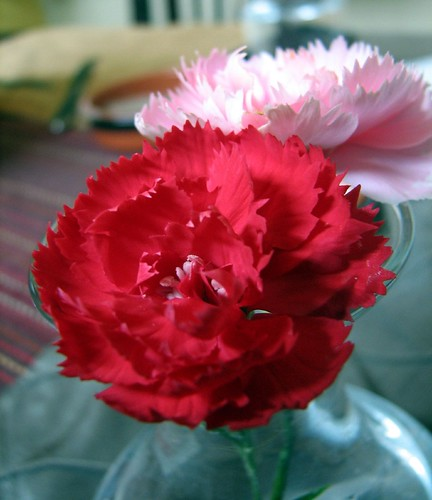 Homegrown carnations