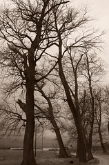 Nude trees (GPS7) Tags: winter blackandwhite bw cloud tree nature rural forest landscape blackwhite sad cloudy bare empty country hellas peaceful calm greece macedonia lonely emptiness baretree katerini pieria  olympicbeach       paraliakaterinis
