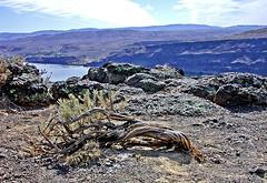 nice-tree (*Silvie*) Tags: part3 roadtrip2006