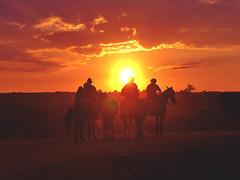 Sol farroupilha (Eduardo Amorim) Tags: sunset brazil horses horse southamerica brasil caballo cheval atardecer caballos bravo tramonto sonnenuntergang prdosol cavalos pferde cavalli cavallo cavalo gauchos pferd riograndedosul pampa poniente coucherdesoleil hest hevonen campanha brsil chevaux gaucho entardecer  amricadosul poente bag fronteira hst gacho  amriquedusud naturesfinest  gachos  sudamrica suramrica amricadelsur  sdamerika supershot   americadelsud abigfave anawesomeshot  ultimateshot americameridionale holidaysvacanzeurlaub campeiros favemegroup3 flickrdiamond ysplix campeiro eduardoamorim coolestphotographers
