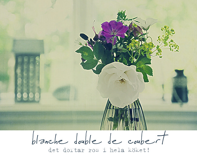 blanche double de coubert