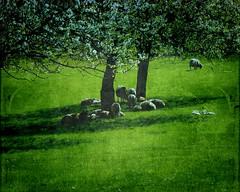 Les bucoliques ? The pastoral.