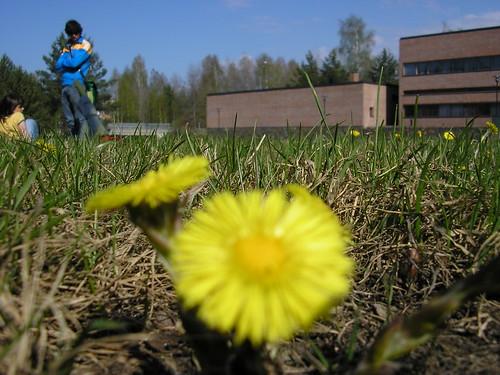 Flor y yo
