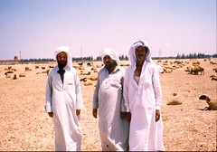 Bedouin shepherds