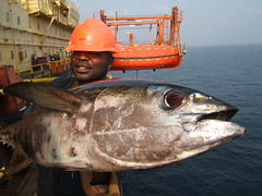 Yellowfin Tuna (sendroiu) Tags: ocean africa offshore atlantic rig nigeria oil huge capture tuna cotcbestof2006