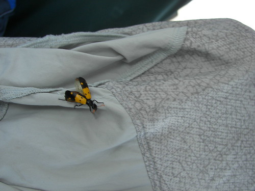 Quite a bug on my jacket