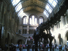 NHM Central Hall with Diplodocus