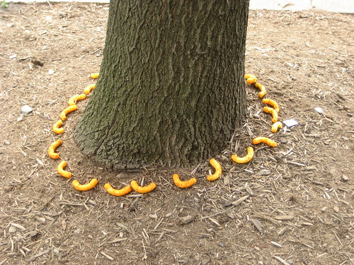 Cheetos around a tree