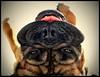 Sunbathing Stare (Scottspy) Tags: leica pets dogs goofy animals closeup puppy lumix funny upsidedown mastiff sunny stare blowout sunbathing blackwell bighead bullmastiff heatwave mastiffs largebreed scottspy impressedbeauty blurribbonwinner superbmasterpiece
