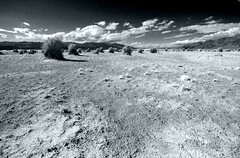 The Devil's Cornfield (sandy.redding) Tags: california monochrome landscape desert deathvalleynationalpark optikverve tokinaatx124prodx
