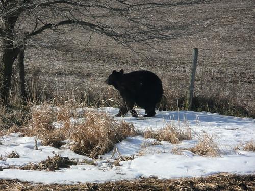 bearbureaucounty