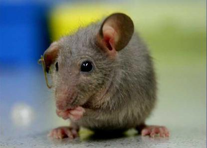 mice_5638