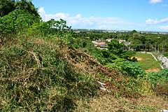 Ilha do Ajuricaba tomada por matagal