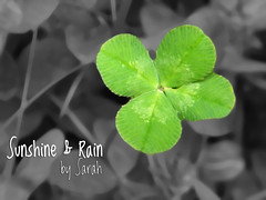 Lucky Clover stands out among the rest (Sunshine & Rain) Tags: black green nature lucky clover rare find selective fourleaf