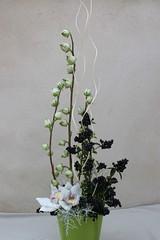 """Høj orchidé dekoration • <a style=""""font-size:0.8em;"""" href=""""http://www.flickr.com/photos/53775014@N03/5106548363/"""" target=""""_blank"""">View on Flickr</a>"""