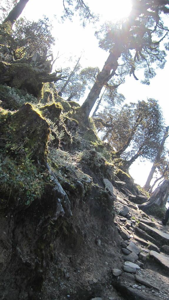 Steps & Trees