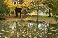 IMG_8327 (Xavier GILLE) Tags: fall automne burgundy deadleaves bourgogne feuillesmortes