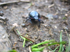 Beetle (rightbeforeleft) Tags: norway flm flam