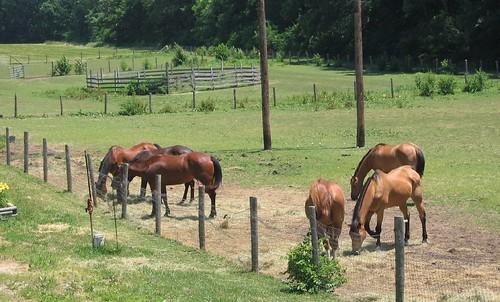 Horses on Newman Road