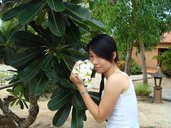 Hợi ơi , hoa héo tại Hợi (zhongxiao_87) Tags: osaka hồ tràm