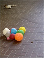 cat with balloons - by Bright Tal