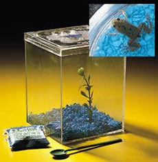 2502-grow-a-frog-kit-l