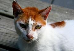 patbrodycatshelter catsontheweborg