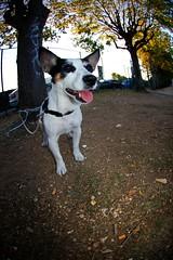 Le DOG !!