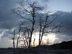 Trees in Belham River valley Montserrat (m0aep) Tags: sunset panasonic montserrat fz38 belhamriver