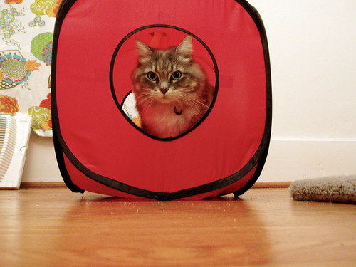 kitty in red cube