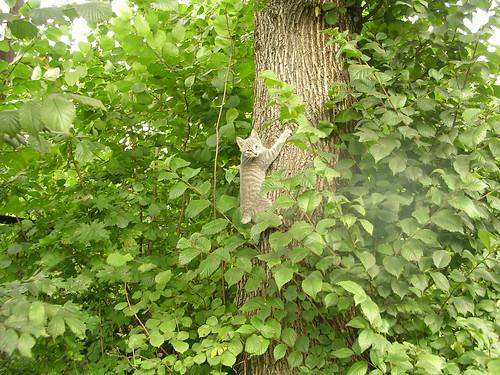 kitty up a tree.